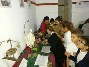 Finalizo la muestra en el Museo de la Ciudad de Viale1