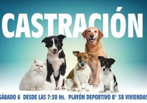 AVISO DE CASTRACIONES