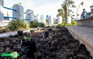 Colocan plantines en otro sector público de la ciudad