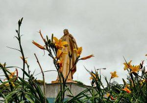 viale-en-2016-se-han-cultivado-casi-tres-mil-plantines3
