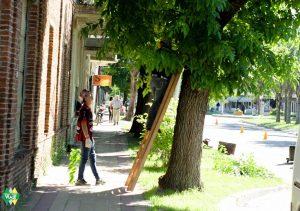 intervenciones-especiales-en-los-espacios-verdes